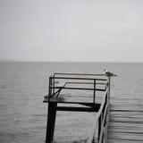 Seagull på pir Royaltyfri Fotografi