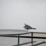 Seagull på pir Royaltyfria Bilder