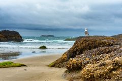 Seagull på Rock på stranden royaltyfria foton