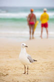 Seagull på sand på stranden Arkivbilder