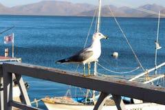 Seagull på skeppsdockan royaltyfri fotografi