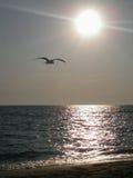 Seagull på solnedgången Fotografering för Bildbyråer