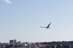 Seagull på staden Arkivbild