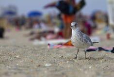 Seagull på strand arkivfoton