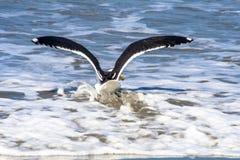 Seagull på stranden fotografering för bildbyråer