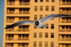 Seagull på stranden royaltyfri fotografi
