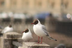 Seagull på stranden Arkivfoto