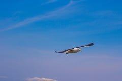 Seagull på stranden Gaivota Fotografering för Bildbyråer