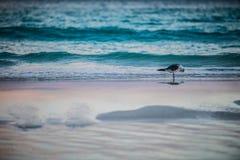 Seagull på stranden i ottan fotografering för bildbyråer