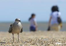 Seagull på stranden med turister royaltyfri bild