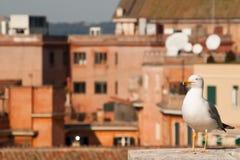 Seagull på taket Arkivbild