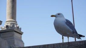Seagull på taklägga Royaltyfri Bild