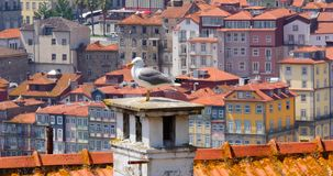 Seagull på taklägga lager videofilmer