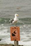Seagull på tecken Royaltyfri Foto