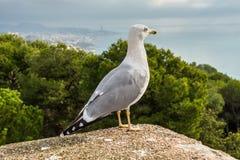 Seagull på väggen royaltyfri fotografi
