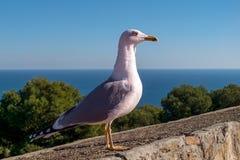 Seagull på väggen arkivfoto
