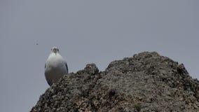 Seagull på vagga Royaltyfri Fotografi