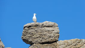 Seagull på vagga Royaltyfria Bilder