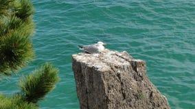 Seagull på vagga Arkivbild