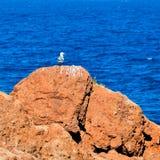 Seagull på vagga Arkivfoto