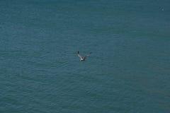 Seagull på vattnet Royaltyfria Bilder