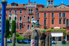 Seagull p? en tr?stolpe fotografering för bildbyråer
