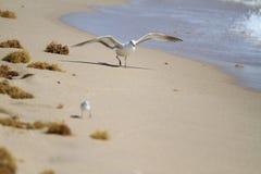 Seagull på stranden Arkivbild