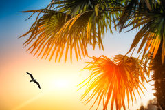 Seagull among palm trees Royalty Free Stock Image