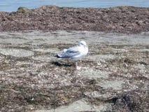 Coast of the Azov Sea royalty free stock images