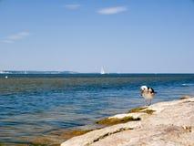 Seagull patrzeje w dół Fotografia Royalty Free