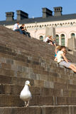 Seagull and people sitting at stairs Stock Photos