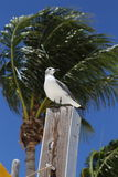 Seagull on perch, Marathon, Florida Stock Image