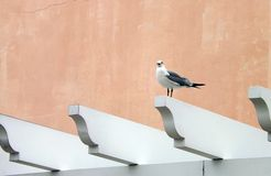 Seagull on perch royalty free stock photo