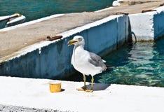 Seagull Stock Photos
