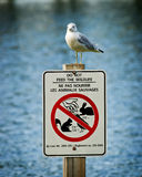 Seagull Perched Atop Do Not Feed Wildlife Sign Royalty Free Stock Photos