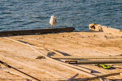 Seagull perched on the end of a floating pier Stock Photo
