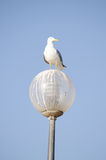 A seagull perched a lamp set against a bright blue sky Royalty Free Stock Photography