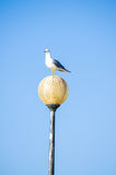 A seagull perched a lamp set against a bright blue sky Royalty Free Stock Photos