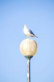 A seagull perched a lamp set against a bright blue sky Royalty Free Stock Images