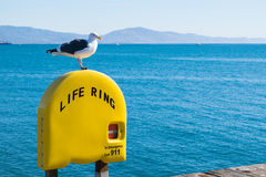 Seagull perched on life ring in Santa Barbara beach Royalty Free Stock Photos