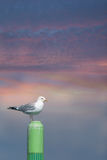 Seagull perched on a maritime marker buoy Stock Photo