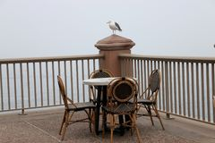 Seagull perched on a post, waiting for diners. Stock Image