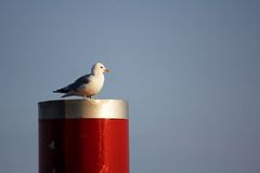 Seagull perched on Red Column Stock Images