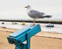 Seagull perched on a telescope at the seaside Stock Photography