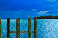 Seagull perched on wooden post of pier jutting out in ocean on Sombrero Beach. Seagull perched on wooden post of pier jutting out in glittering blue ocean on Stock Photos