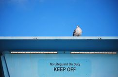 Seagull stands guard on lifeguard tower stock photos