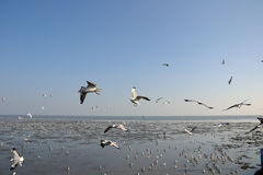 Seagull piękny fotografia stock