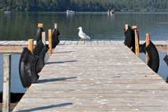Seagull Pier. Seagull going for a stroll on the end of a dock Stock Images