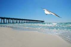 Seagull by Pier. Soaring seagull flying over beautiful ocean with pier in background Stock Image