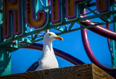 Seagull at pier. With blue sky Royalty Free Stock Photo